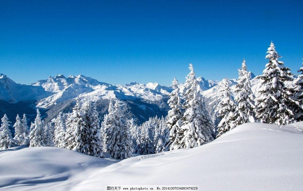 风景雪动物唯美图片