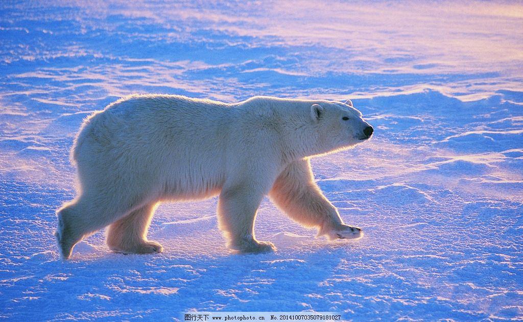 动物世界 动物园 熊 北极熊 摄影