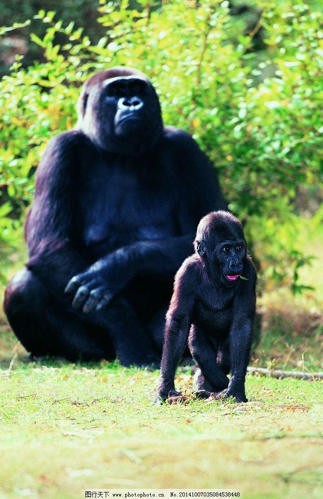 动物世界 动物 动物园 腥腥 黑腥腥 动物 摄影 生物世界 野生动物 304
