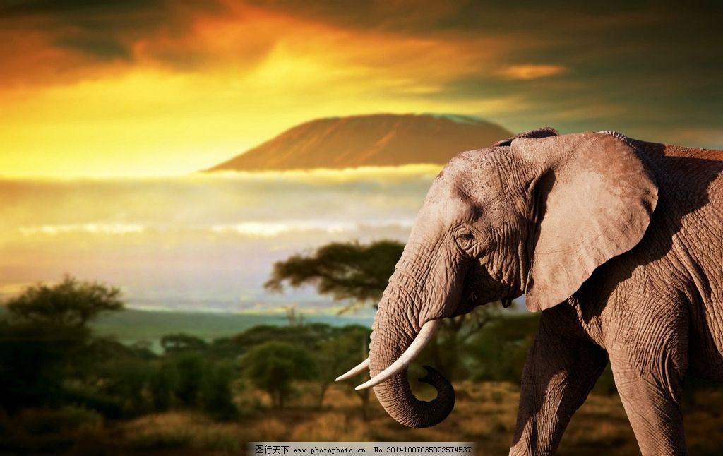 秦皇岛野生动物园大象图片