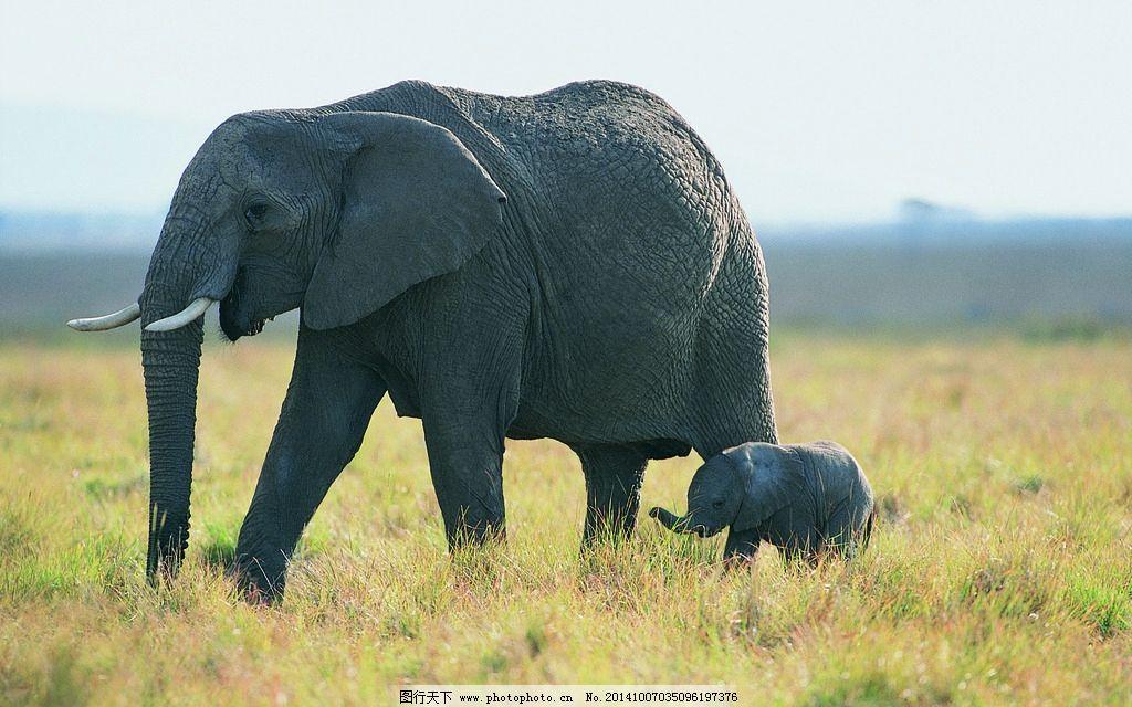 动物世界 动物 动物园 大象 母子象 动物 摄影 生物世界 野生动物 304