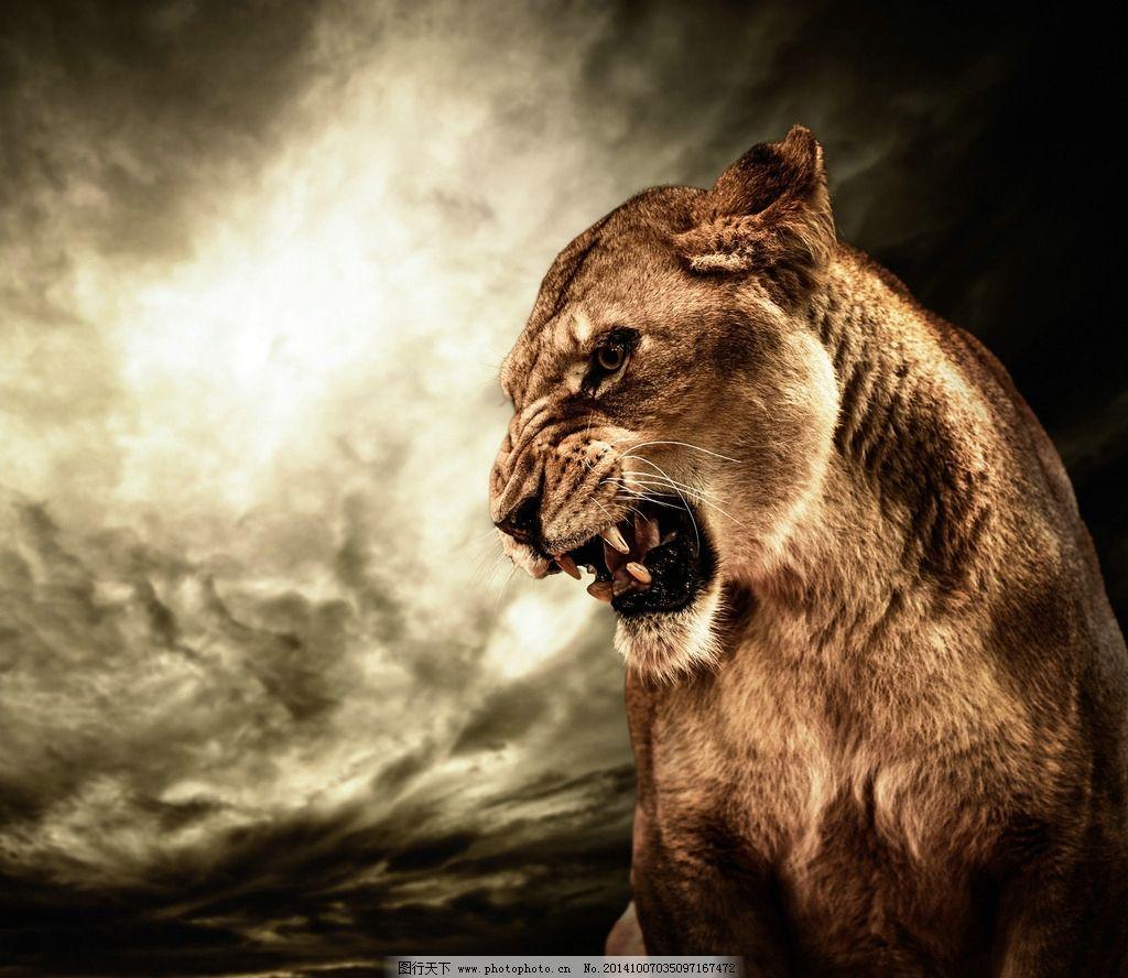 秦皇岛野生动物园狮子图片