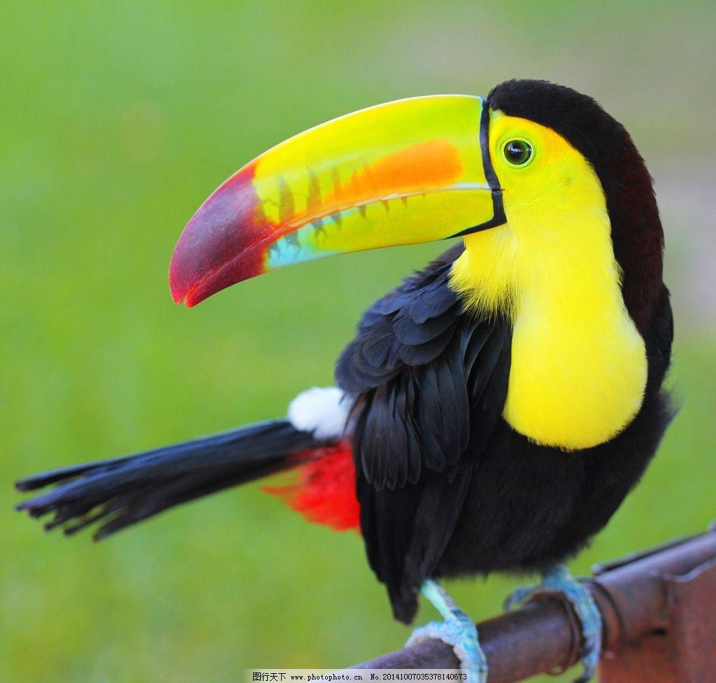 秦皇岛野生动物园鹦鹉图片