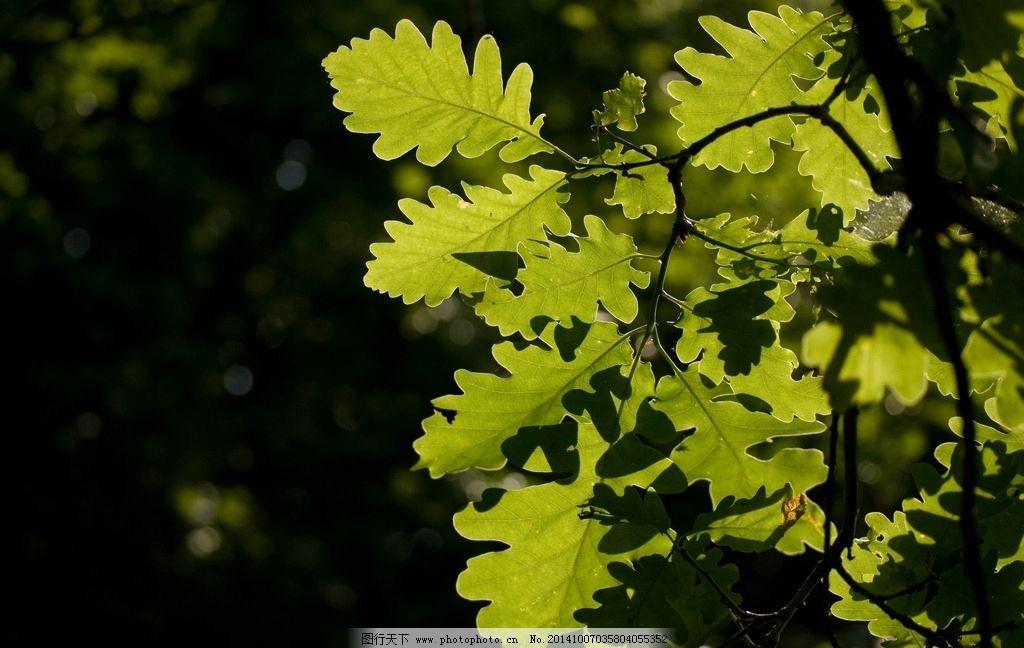 树叶 森林 树木 绿树 叶子 夏天 摄影 300 dpi     树木 摄影 生物