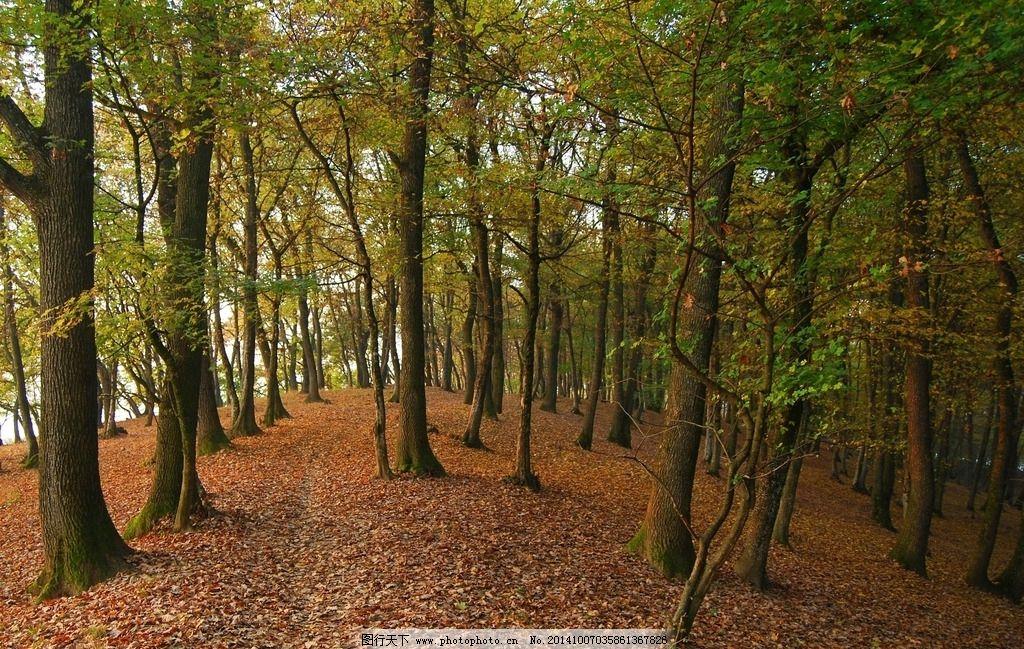 森林 树林 小路 落叶 丛林 摄影 叶子 夏天 300 dpi     摄影 生物图片