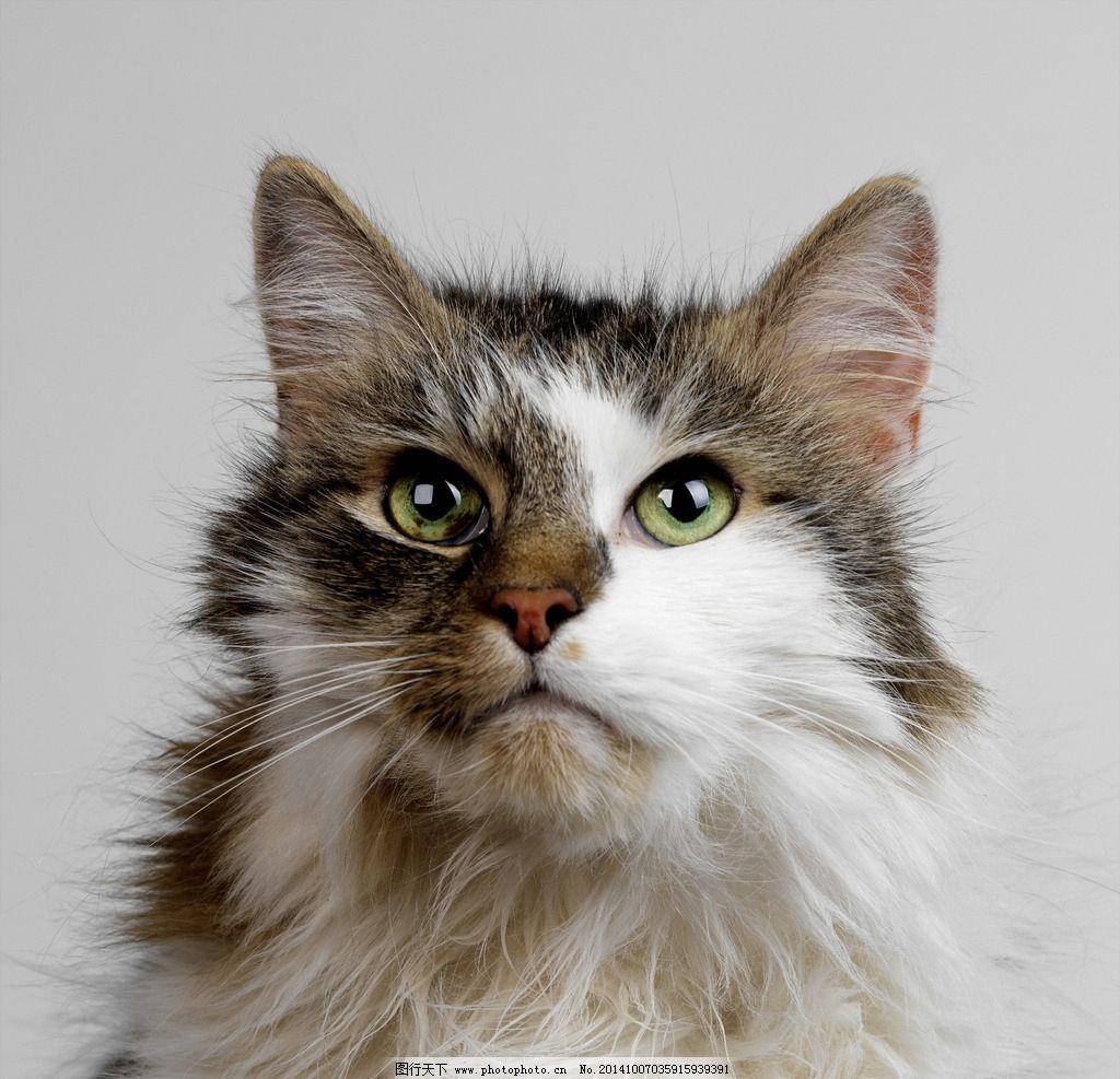 壁纸 动物 猫 猫咪 小猫 桌面 1024_987