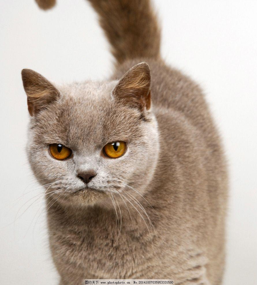 动物 猫 花猫 小猫 猫咪 动物 摄影 生物世界 家禽家畜 300dpi jpg