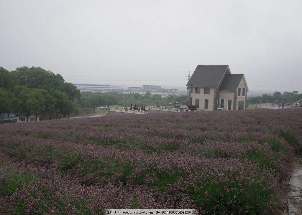 田园风光 田园 薰衣草 薰衣草风景 紫色花海 花海 花的海洋 小别墅 农