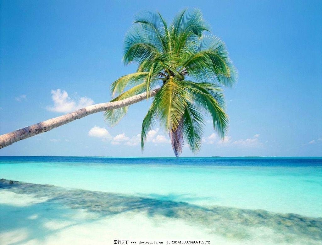 椰子树 大海风光 蓝色海水 海报沙滩 阳光明媚  摄影 自然景观 其他
