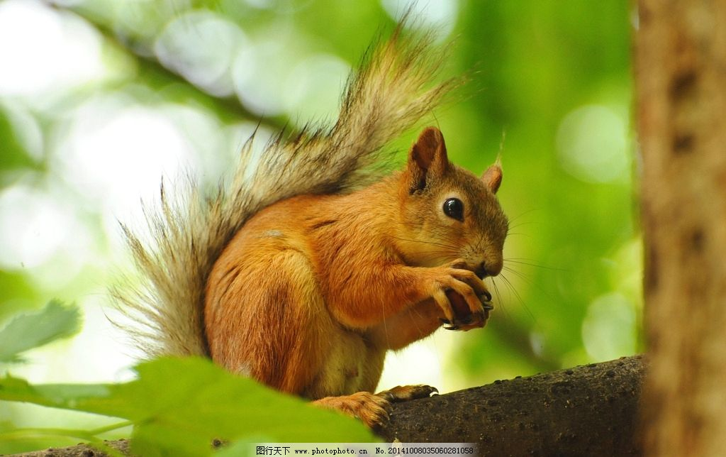 可爱小松鼠 松鼠 萌物 动物 可爱 野生动物 野生动物 摄影 生物世界