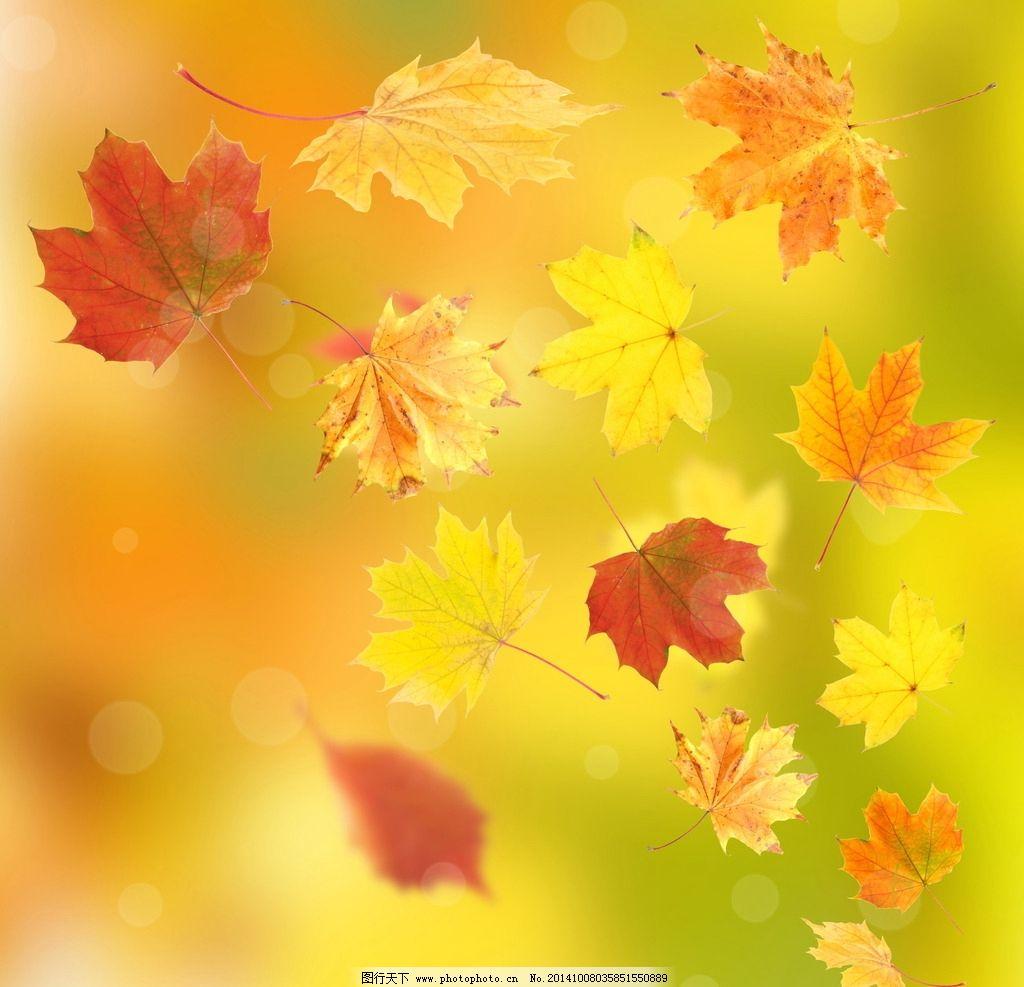 飘零树叶 落叶 叶子 秋叶 枯黄 枯萎 飘落 秋天 枫叶 背景素材图片