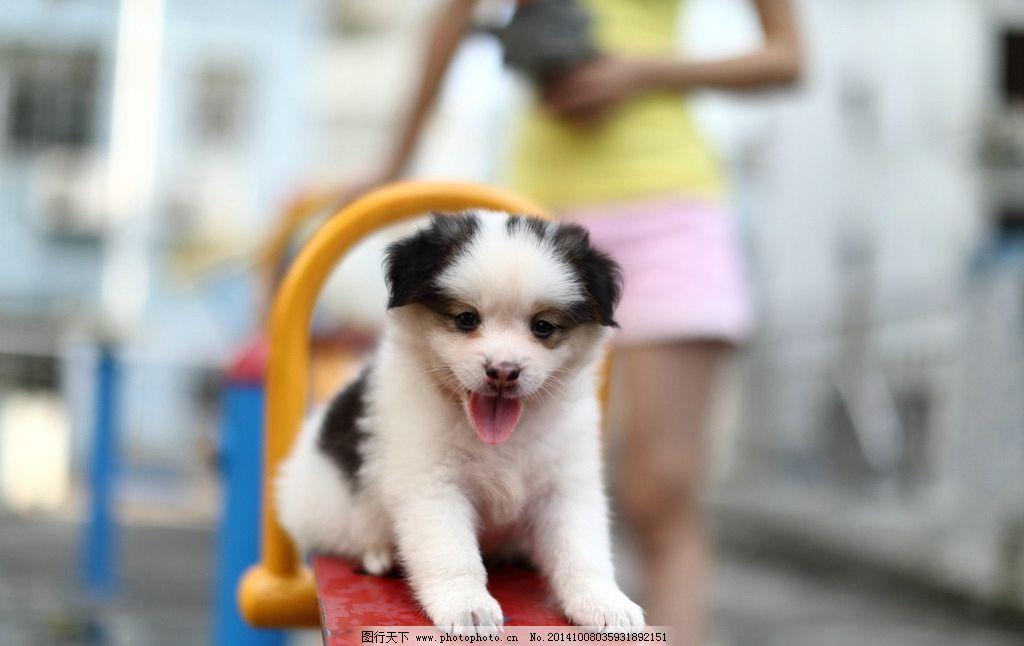 萌宠物狗可爱图片