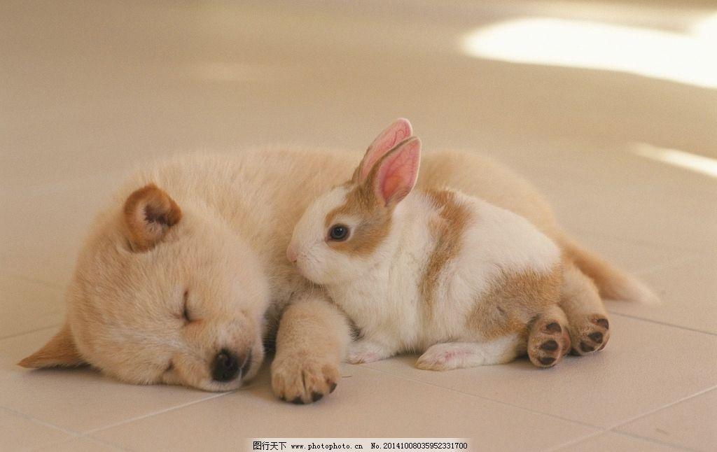 动物 睡觉的狗狗 小狗 狗狗 可爱狗狗 动物 摄影 生物世界 家禽家畜