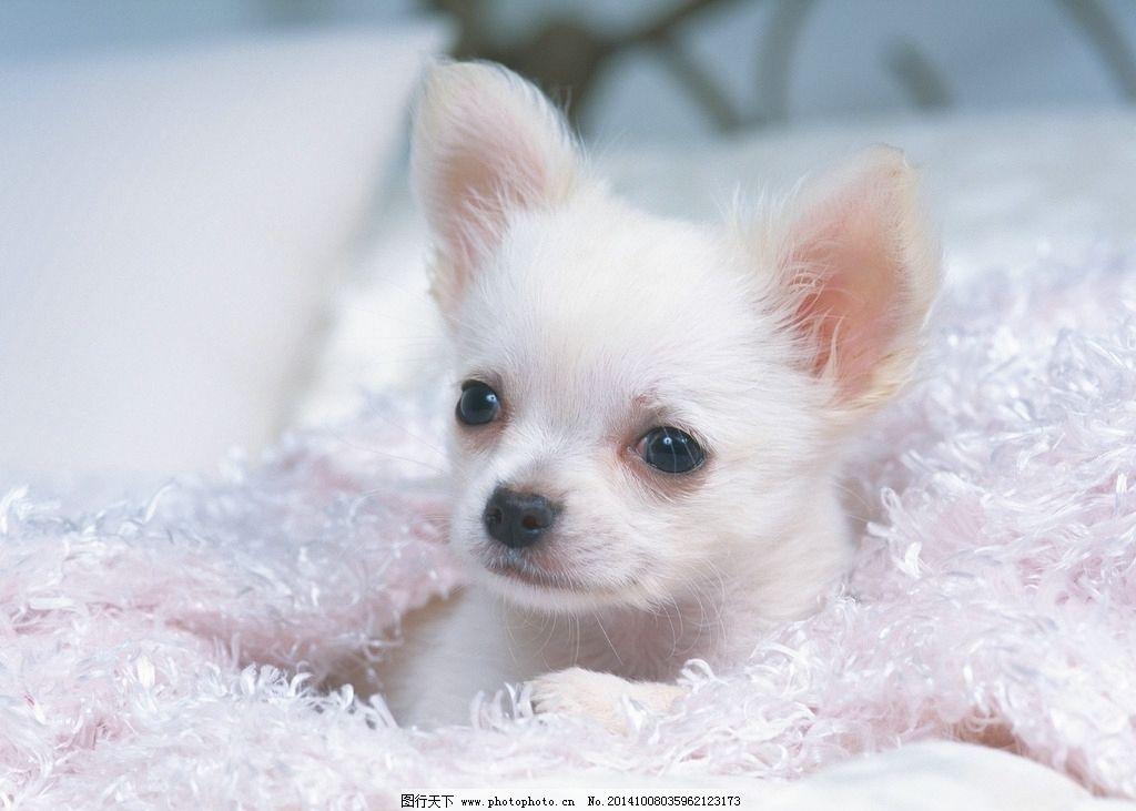 动物 动物世界 小狗 狗狗 可爱狗狗 摄影
