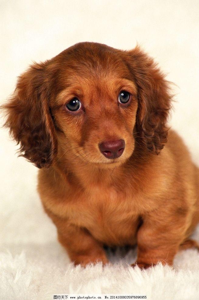 动物 动物世界 小狗 狗狗 可爱狗狗 动物 摄影 生物世界 家禽家畜 350