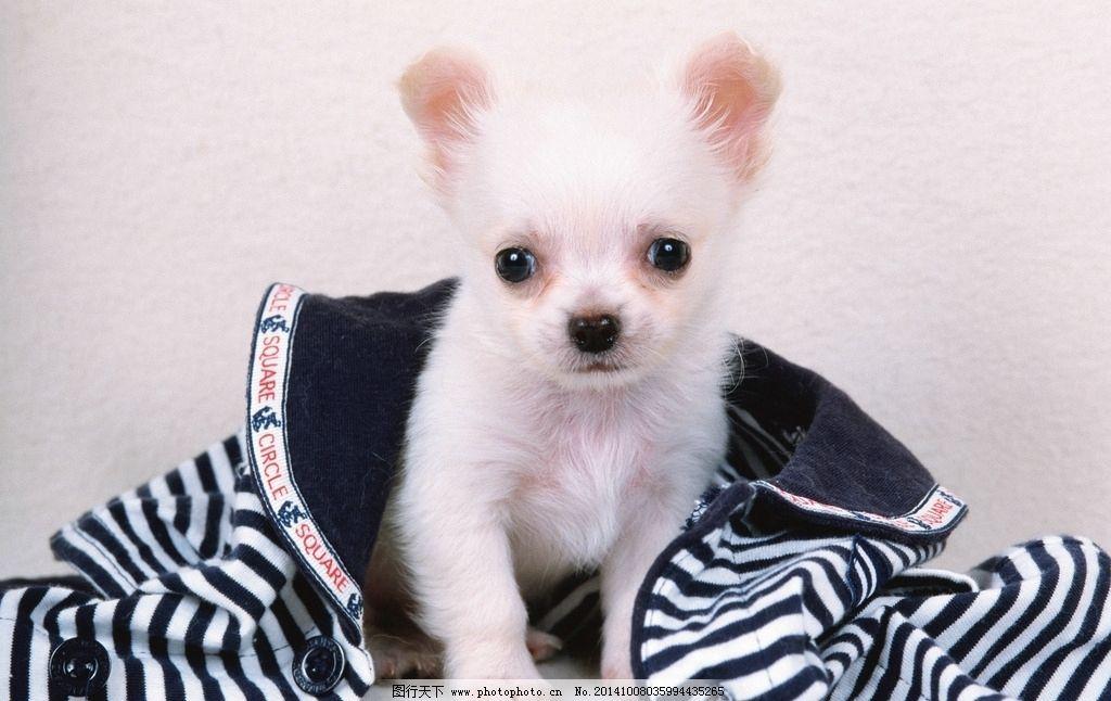 动物 动物世界 小狗 狗狗