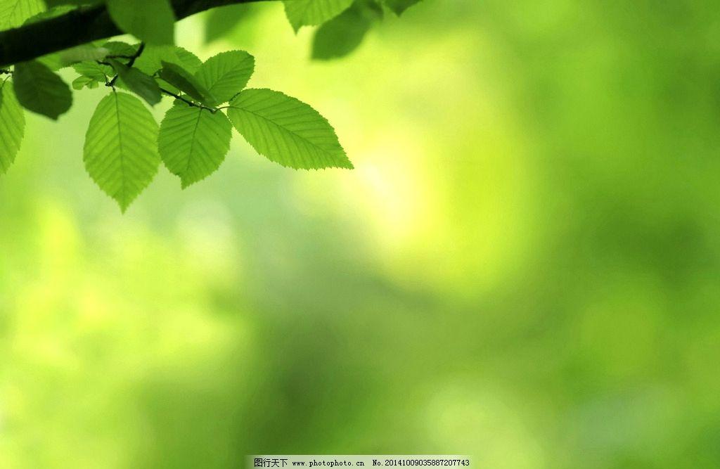 唯美绿叶图片_树木树叶_生物世界_图行天下图库