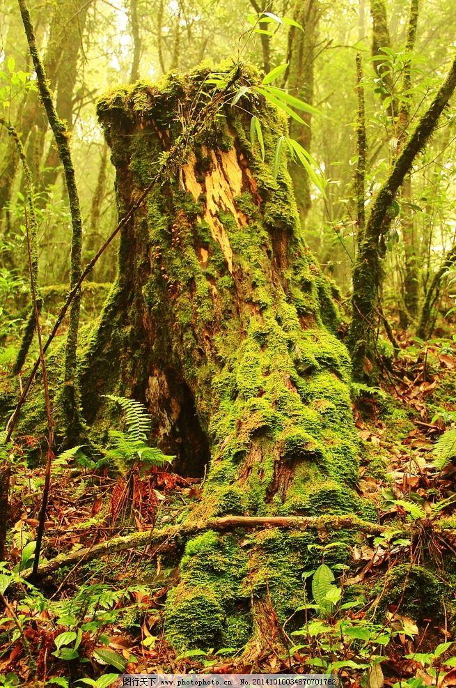 大山 森林 河流 小溪 瀑布 古树 枯树 树木 秋天 自然景观 摄影 自然