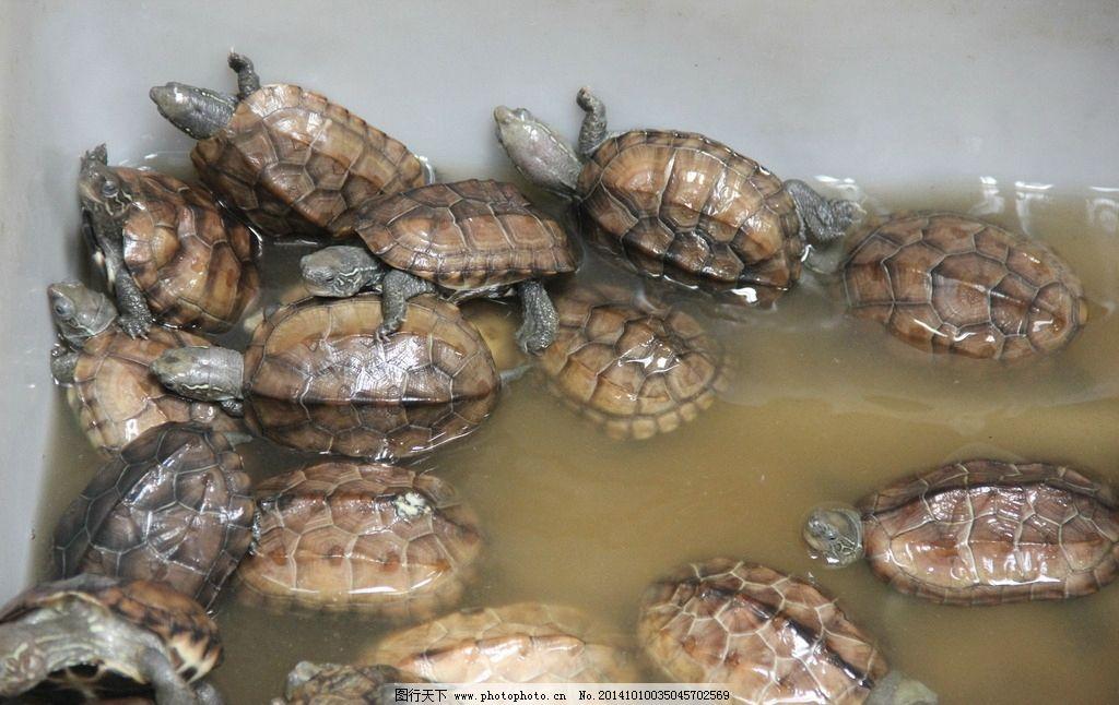 龟 乌龟 爬行动物 可爱的宠物 生物 摄影 生物世界 野生动物 72dpi