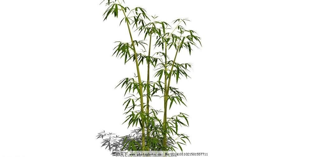 竹子 景观树 绿树 盆景 青竹 热带植物 树林 树木 树叶 观赏竹