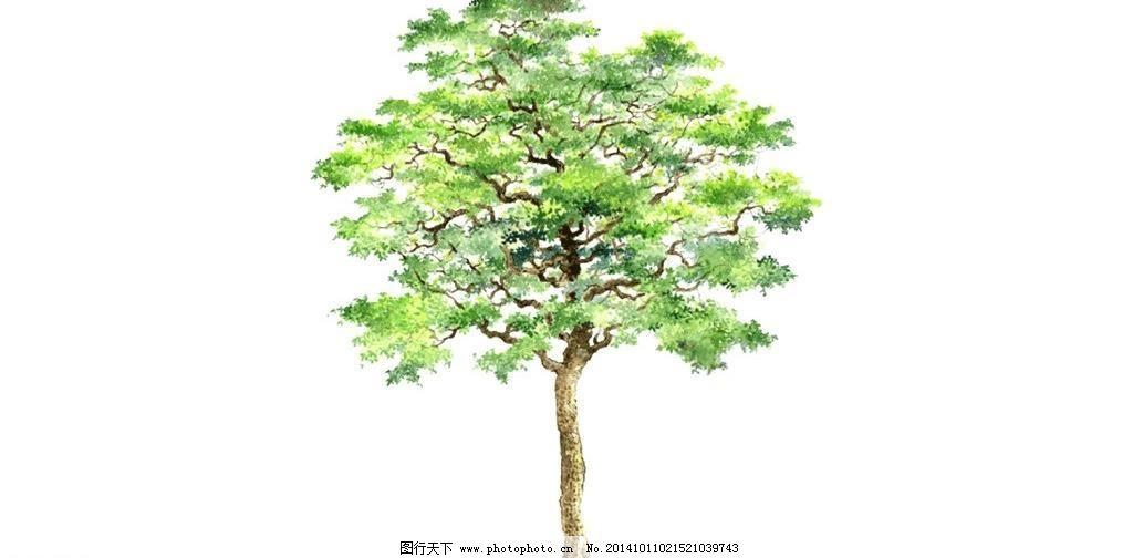 3d设计模型 景观树 绿树 盆景 热带植物 树 树林 树木 树叶 树枝 景观