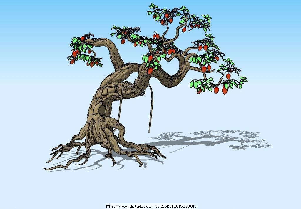 果树盆景设计手绘图