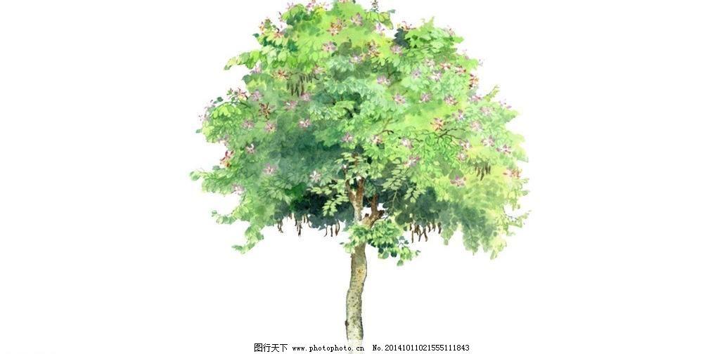 槐树儿童简笔画