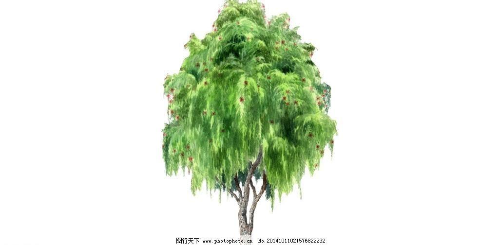 柳树 景观树 绿树 盆景 热带植物 树林 树木 树叶 装饰树 柏树