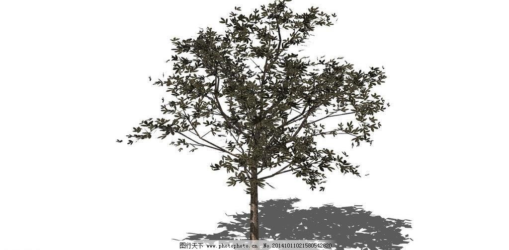 景观树 绿化 绿化树 绿树 模型 树木 松柏 景观树 古树 造型树 松柏
