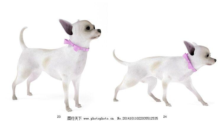 可爱的小狗免费下载 动物 可爱 模型 小狗 动物 模型 小狗 可爱 3d