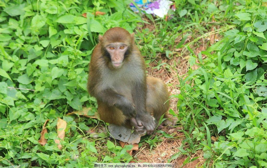 猴子 灵长目 动物 哺乳动物 尾巴 猴 动物园 公园 孙悟空 美猴王 生物