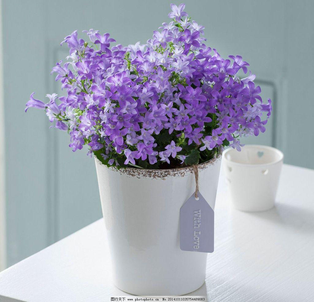 紫色/浪漫紫色小花图片