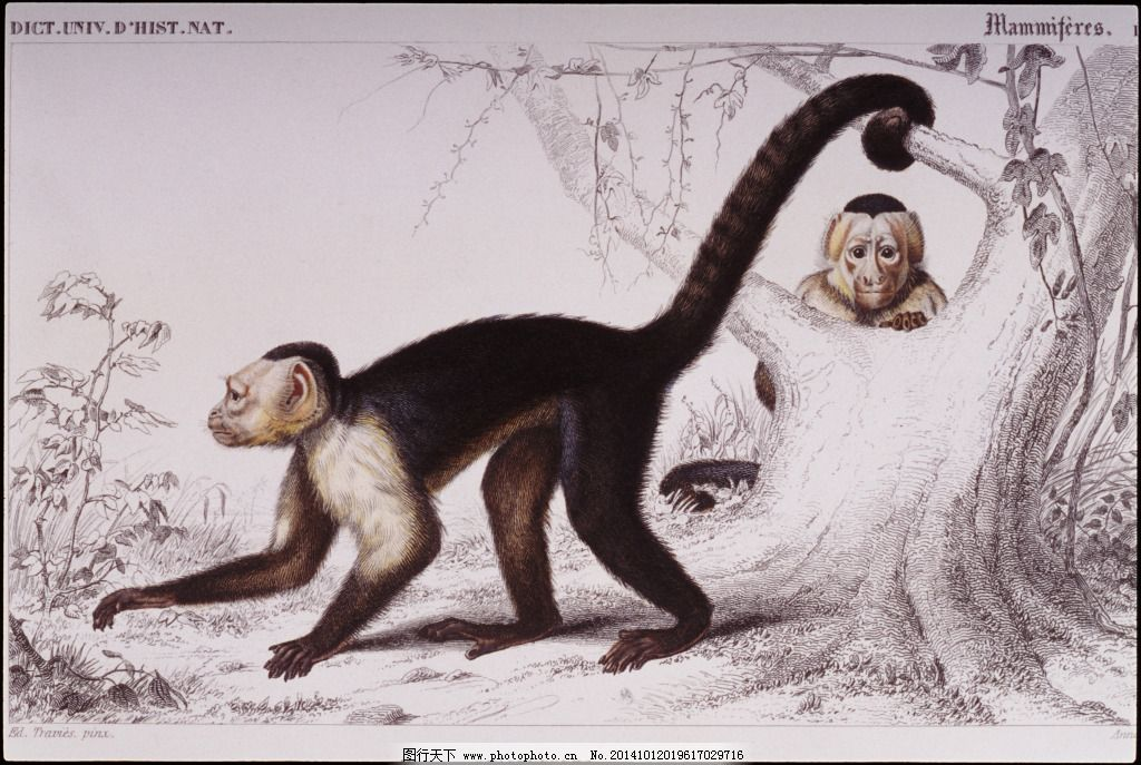 猴子绘画图免费下载 大树 长尾巴猴 大树 爬行 图片素材 文化艺术