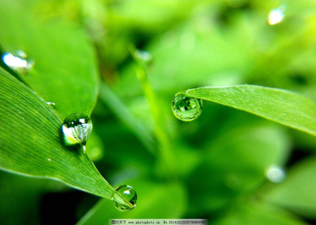 背景 壁纸 昆虫 绿色 绿叶 树叶 植物 桌面 1024_731