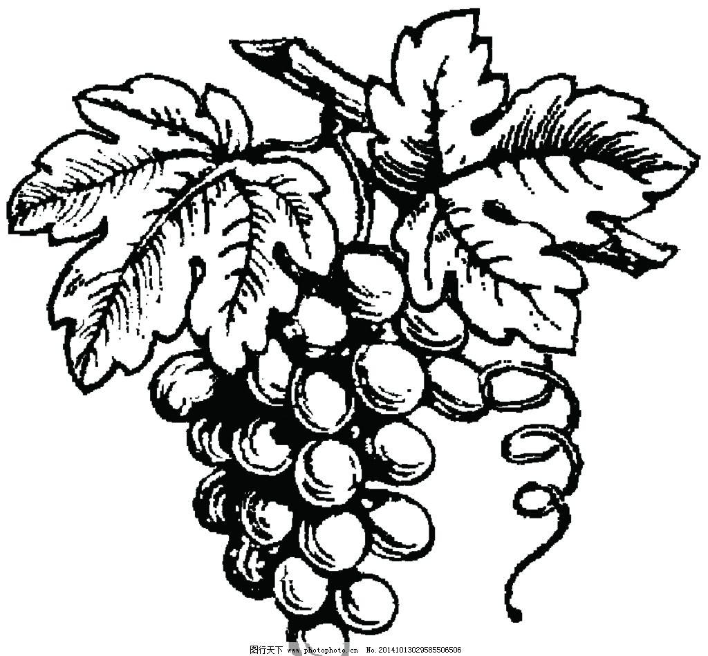 手绘葡萄图片