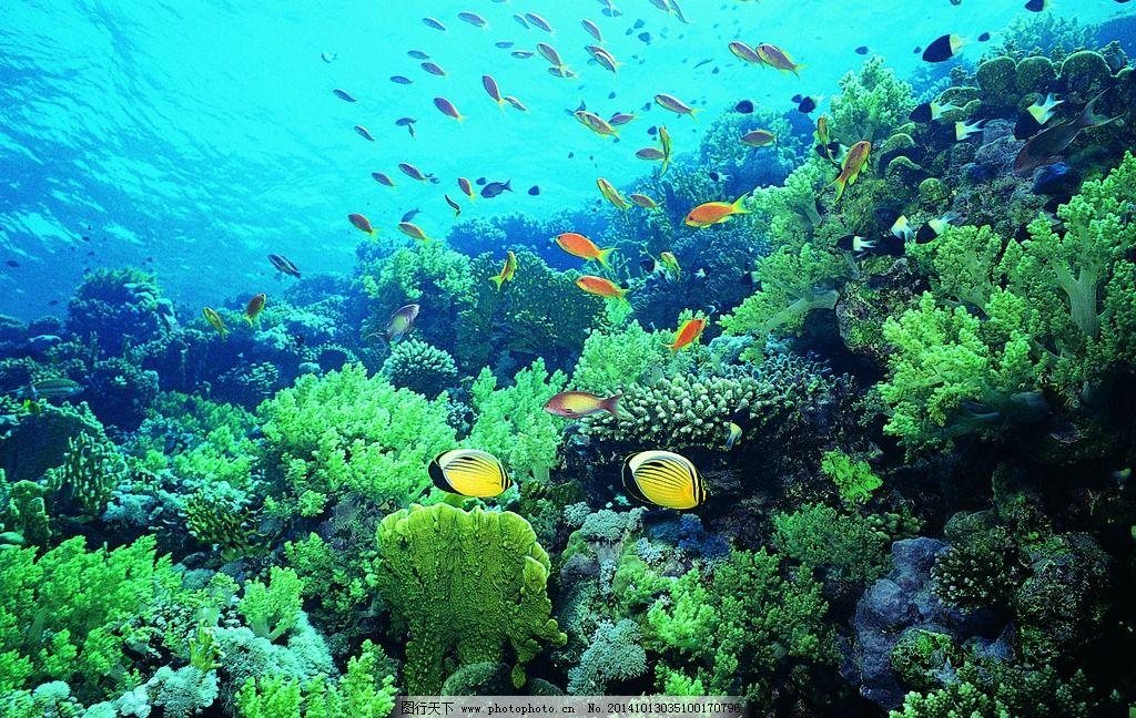 海洋生物 水底生物 水底动物 鱼 大型生物 大海 海洋馆 水族馆