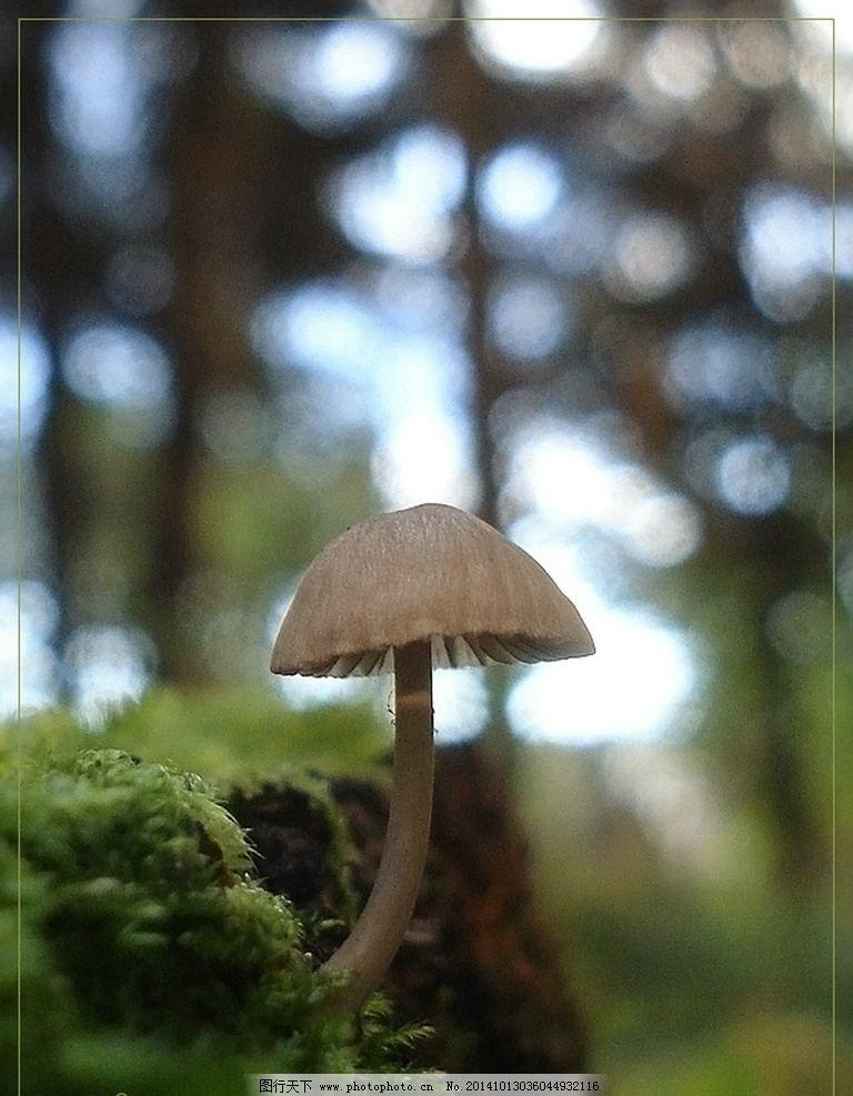 森林 树木 野生 蘑菇 小蘑菇 野蘑菇 真菌 菌类 野生蘑菇 野生菌 食材