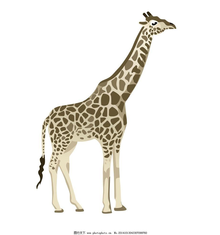 长颈鹿 动物 动物园 彩色 矢量 彩色长颈鹿 卡通长颈鹿 矢量素材