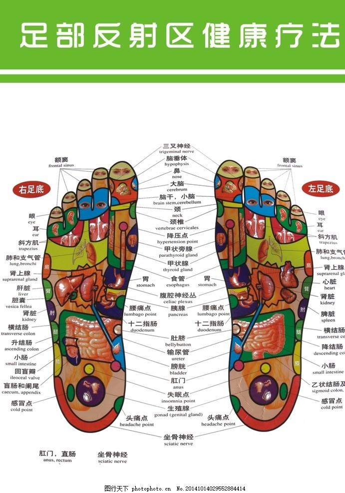 脚底部位结构图
