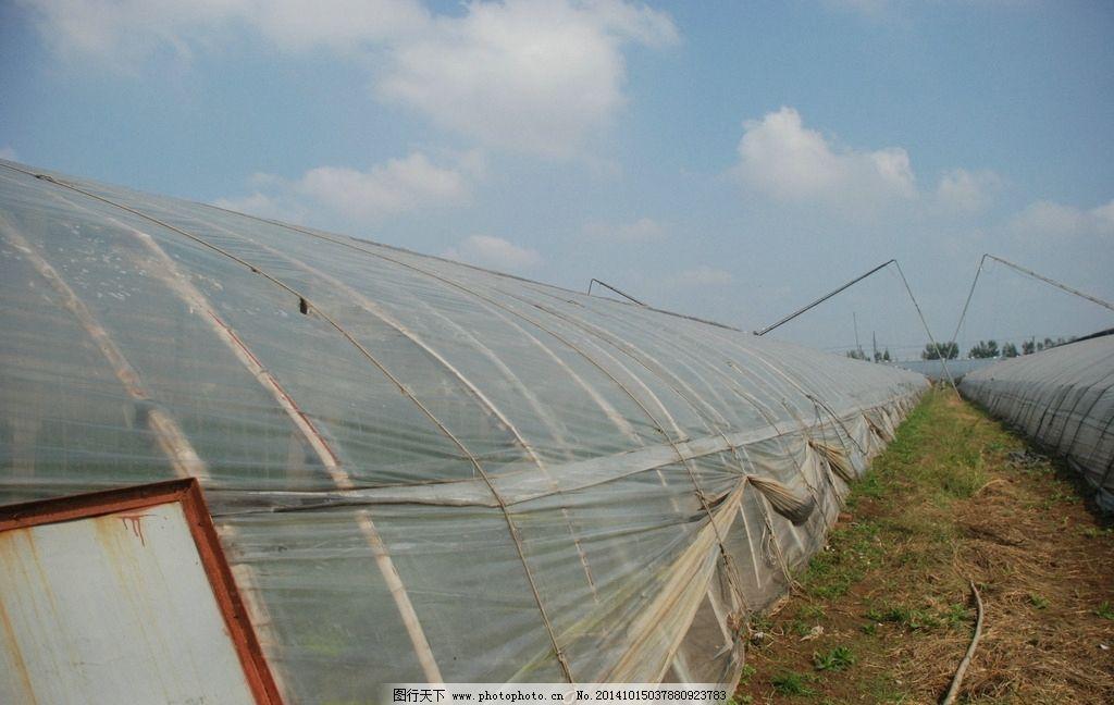 蔬菜大棚基地 农业 暖棚 花窖 塑料大棚 摄影 现代科技 农业生产