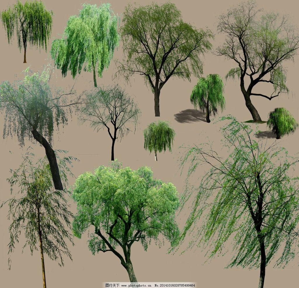柳树素材图片_园林设计_环境设计_图行天下图库