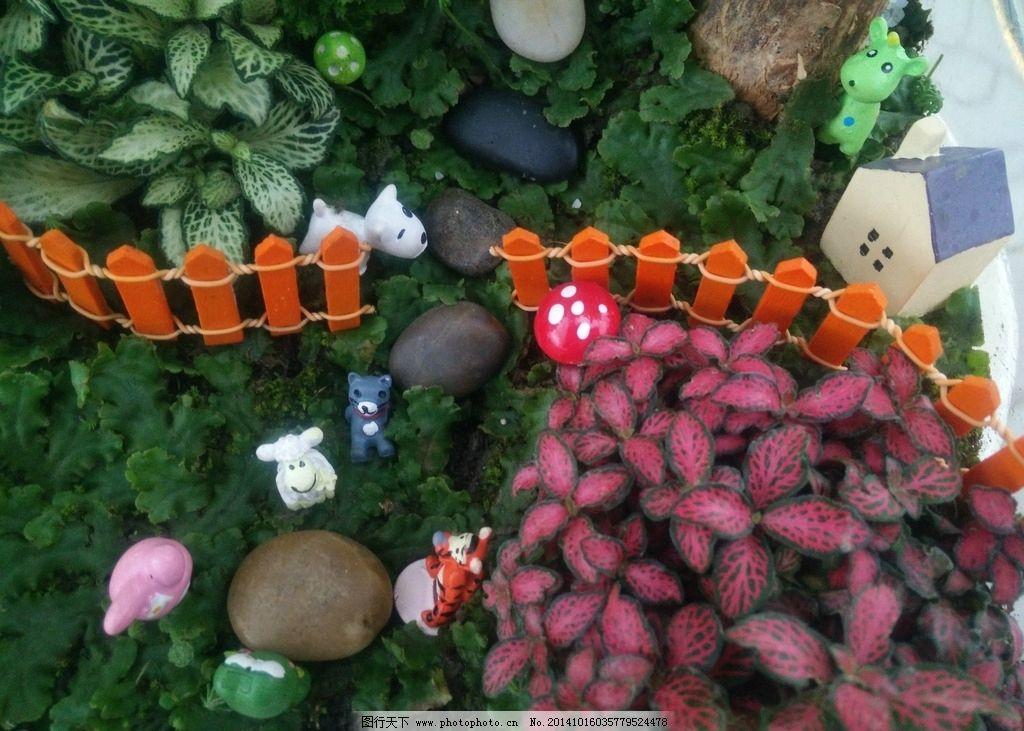 艺术植物 植物拼盘 组合植物 艺术组合 植物花境 花境设计 摄影