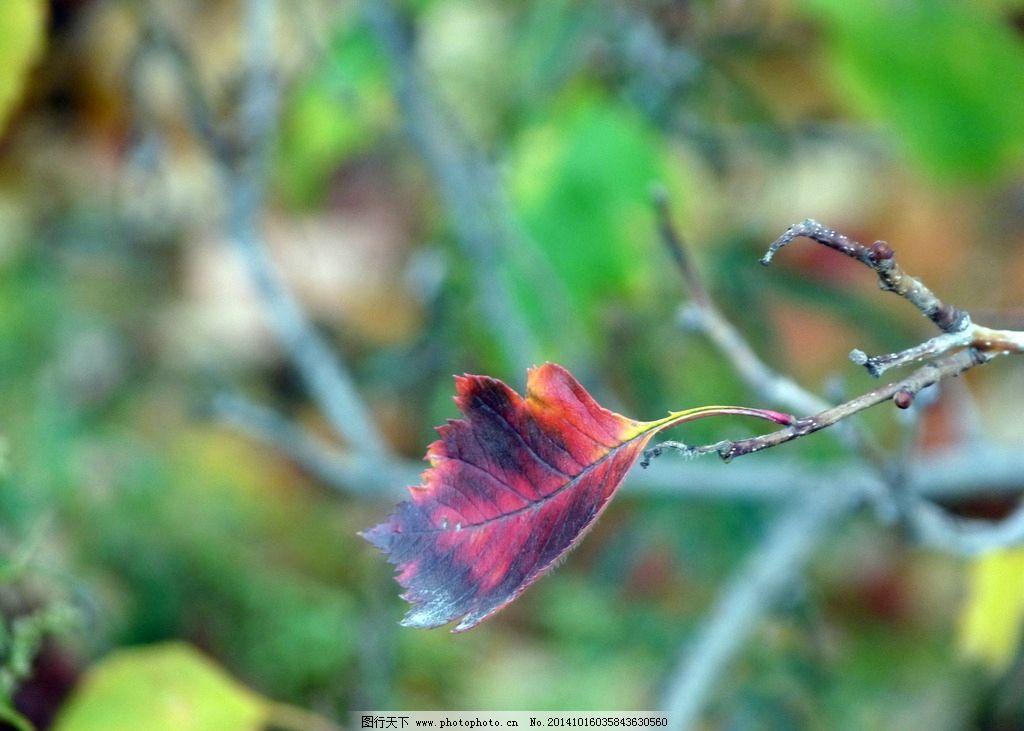 一叶知秋 内蒙古 兴和县 森林公园 苏木山 群山叠翠 雾色缥缈