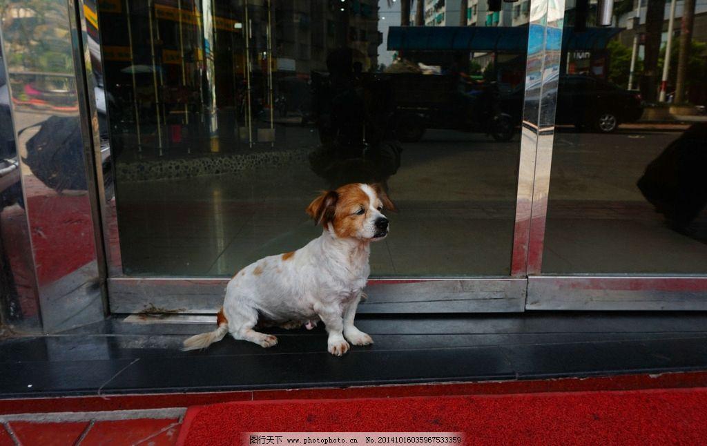 狗 流浪 动物 宠物 狗狗  摄影 生物世界 家禽家畜 240dpi jpg