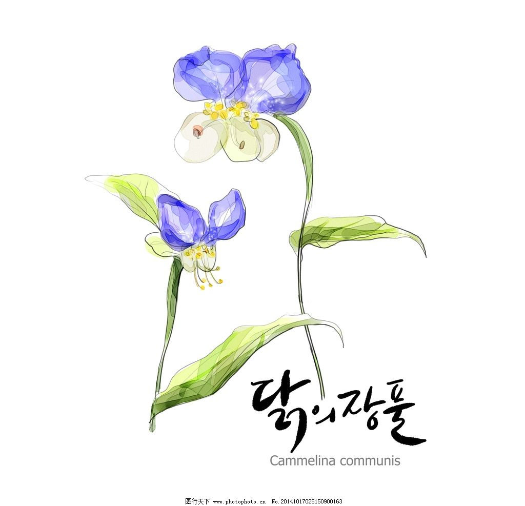 花草 手绘 美图 设计 图片