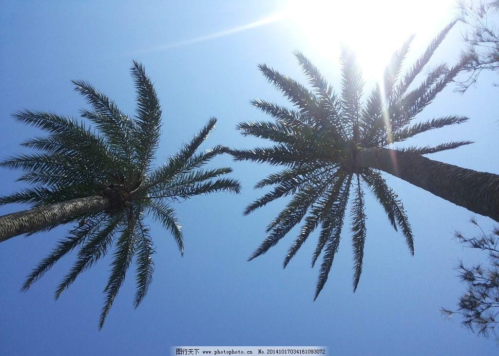 鹅栾鼻国家公园图片,台湾 垦丁 风景 旅游 海边 椰树