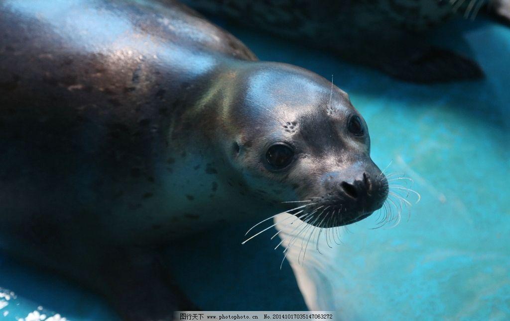 壁纸 动物 海洋动物 灵长目 桌面 1024_646