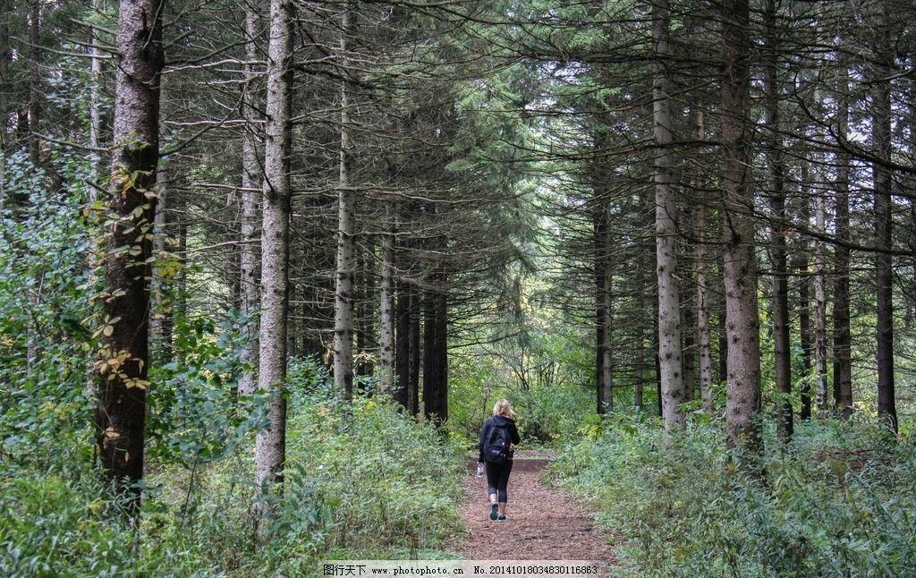 森林 行者 树 树林 树木 小路 风景名胜 摄影 自然景观 自然风景 72