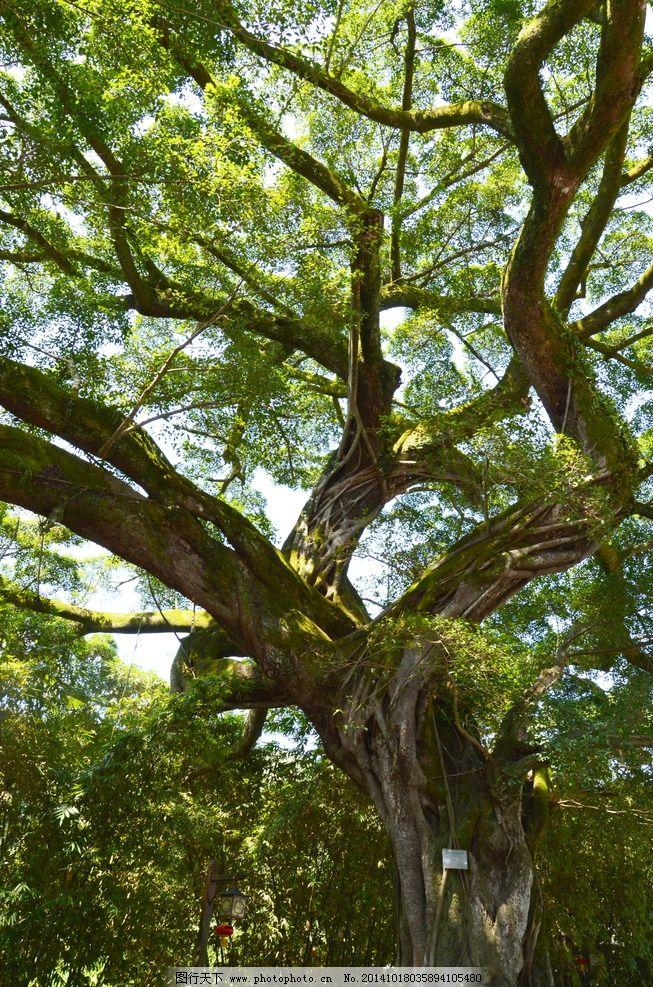 设计图库 生物世界 树木树叶    上传: 2014-10-18 大小: 48.