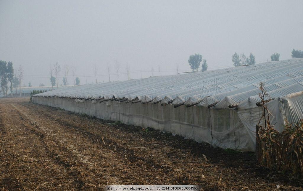 蔬菜大棚基地 蔬菜 大棚 基地 农业 蔬菜大棚 暖棚 花窖 塑料大棚